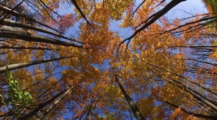 Осень от Рильке