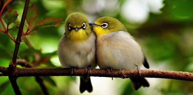 А вы говорите по-птичьи?